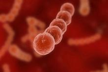 Причины, симптомы и подход к лечению стрептококковой ангины