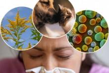 Что такое аллергический ларингит, его симптомы и методы лечения