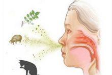 Причины, симптомы и особенности лечения аллергического фарингита