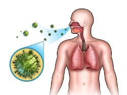 как попадают вирусы в организм
